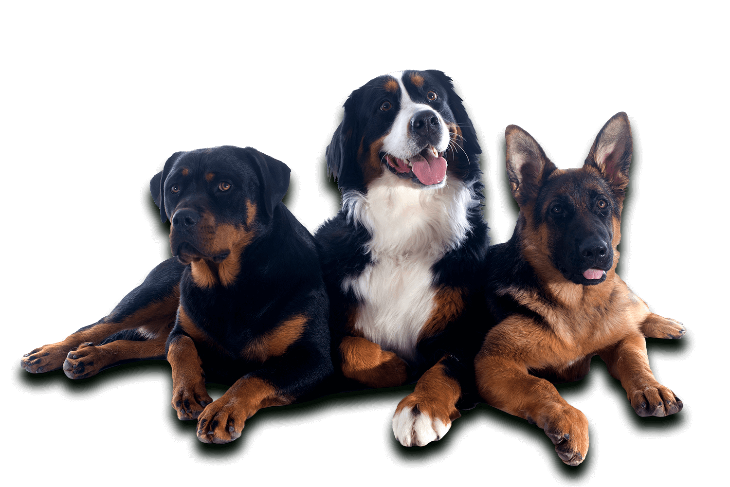 Complete Canine Training Solutions